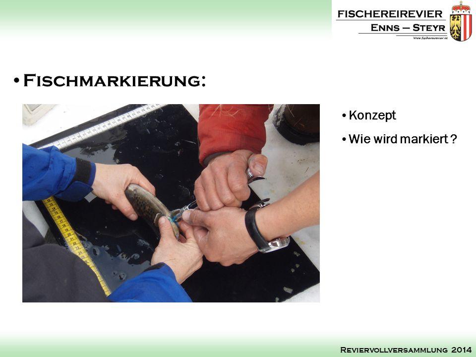 Fischmarkierung: Konzept Wie wird markiert