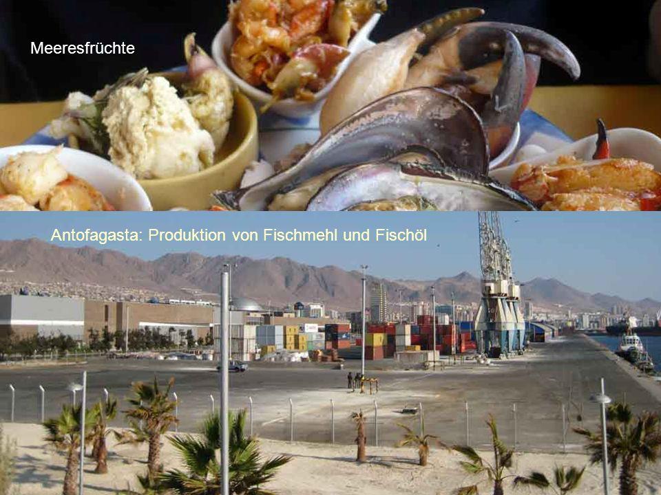 Meeresfrüchte Antofagasta: Produktion von Fischmehl und Fischöl