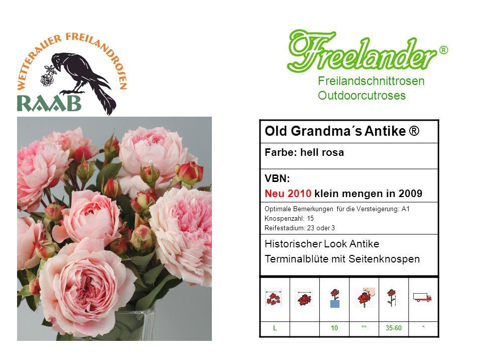 Old Grandma´s Antike ® ® Freilandschnittrosen Outdoorcutroses