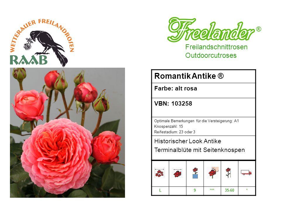 Romantik Antike ® ® Freilandschnittrosen Outdoorcutroses