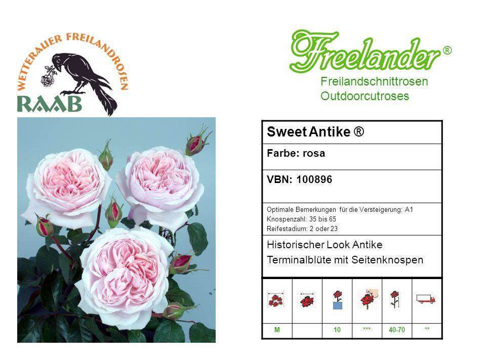 Sweet Antike ® ® Freilandschnittrosen Outdoorcutroses Farbe: rosa