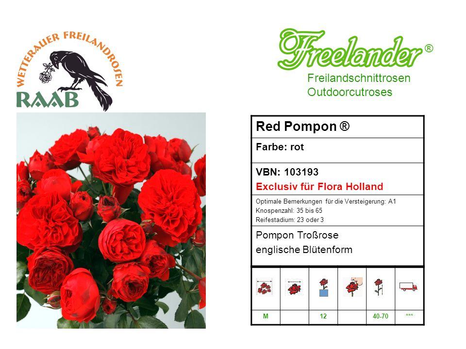 Red Pompon ® ® Freilandschnittrosen Outdoorcutroses Farbe: rot