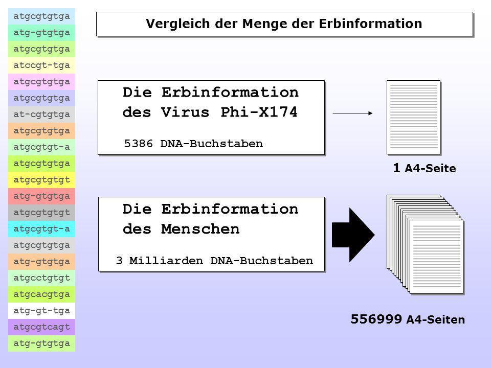 Vergleich der Menge der Erbinformation 3 Milliarden DNA-Buchstaben