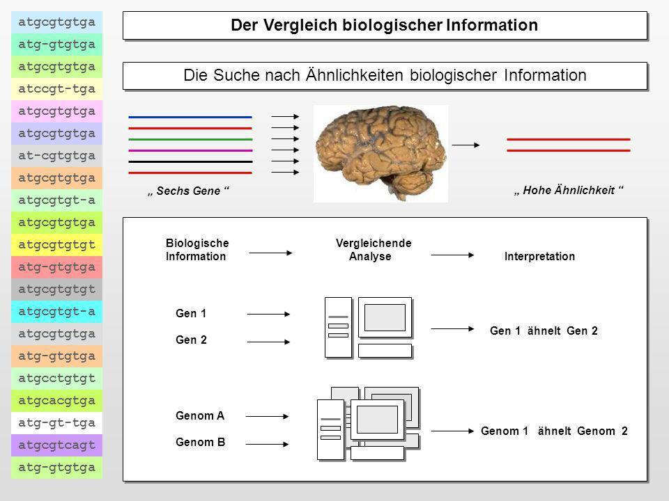 Der Vergleich biologischer Information