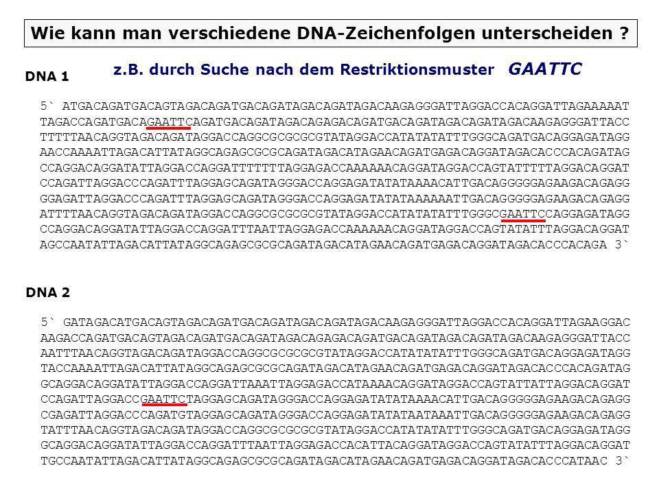 Wie kann man verschiedene DNA-Zeichenfolgen unterscheiden
