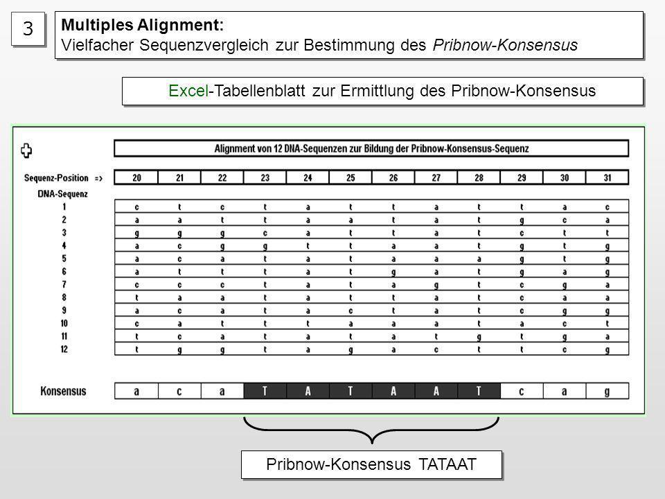 3 Multiples Alignment: Vielfacher Sequenzvergleich zur Bestimmung des Pribnow-Konsensus. Excel-Tabellenblatt zur Ermittlung des Pribnow-Konsensus.