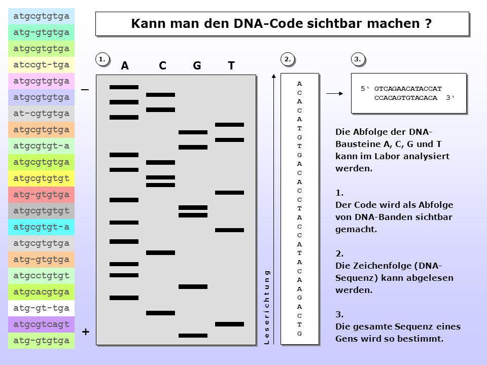 Kann man den DNA-Code sichtbar machen