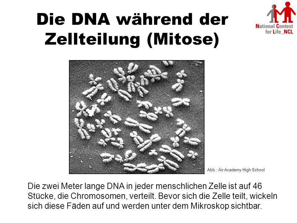 Die DNA während der Zellteilung (Mitose)