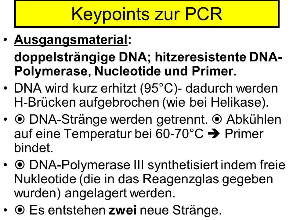 Keypoints zur PCR Ausgangsmaterial:
