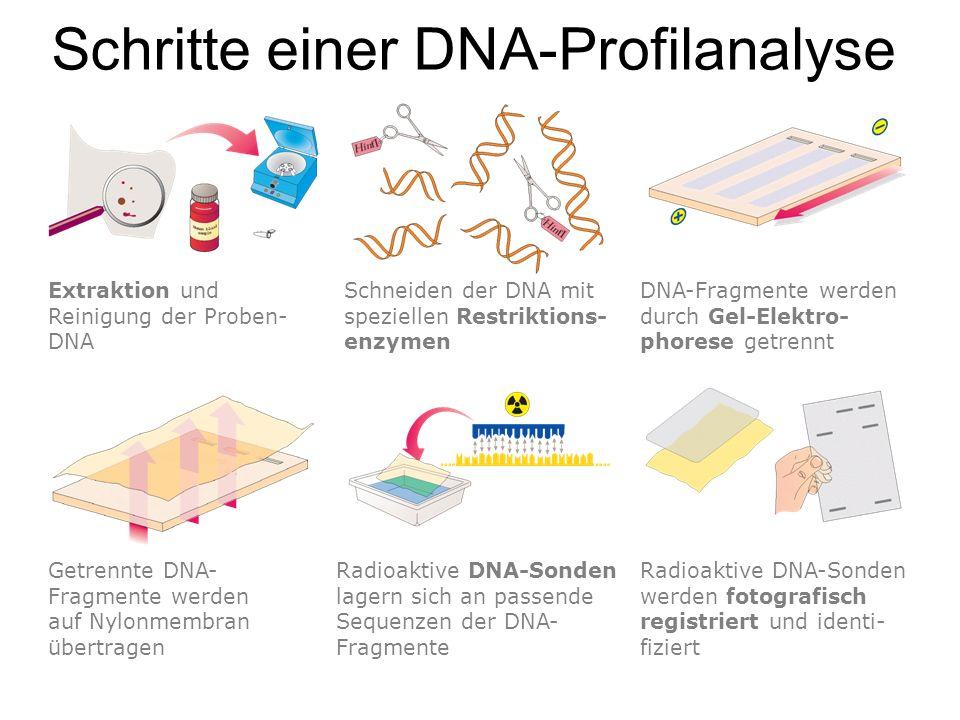 Schritte einer DNA-Profilanalyse