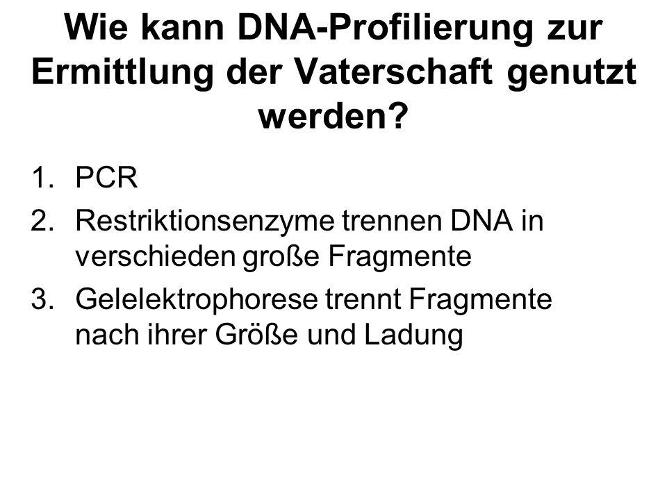 Wie kann DNA-Profilierung zur Ermittlung der Vaterschaft genutzt werden