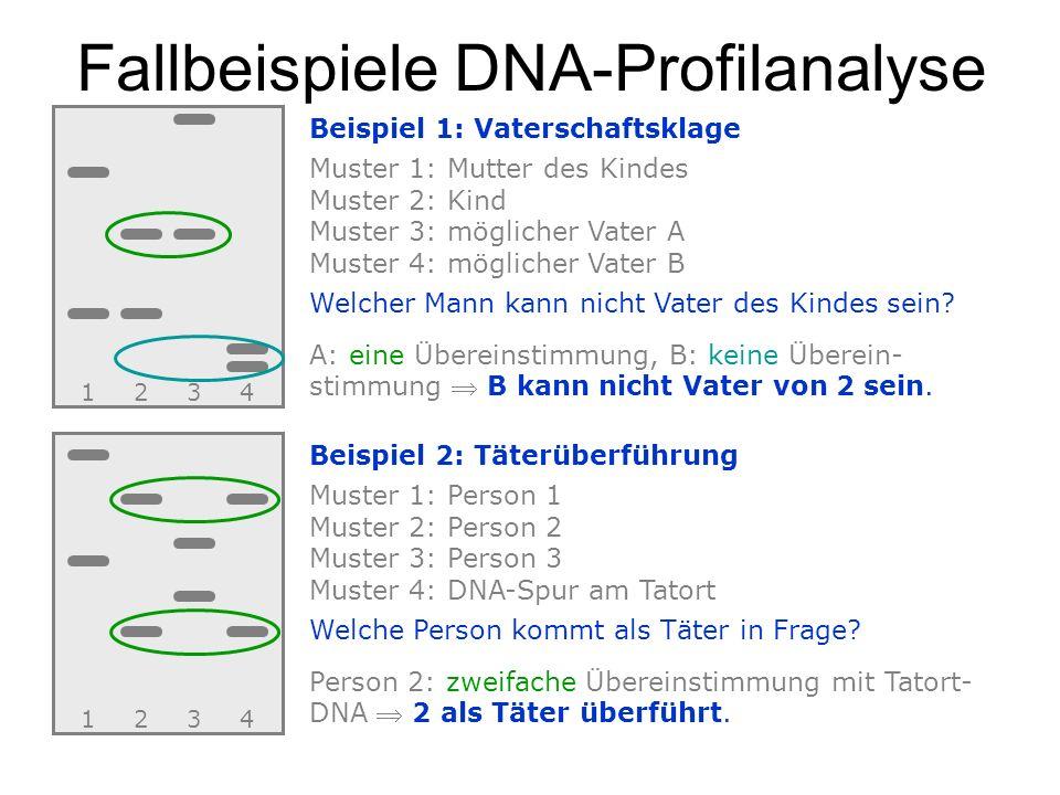 Fallbeispiele DNA-Profilanalyse