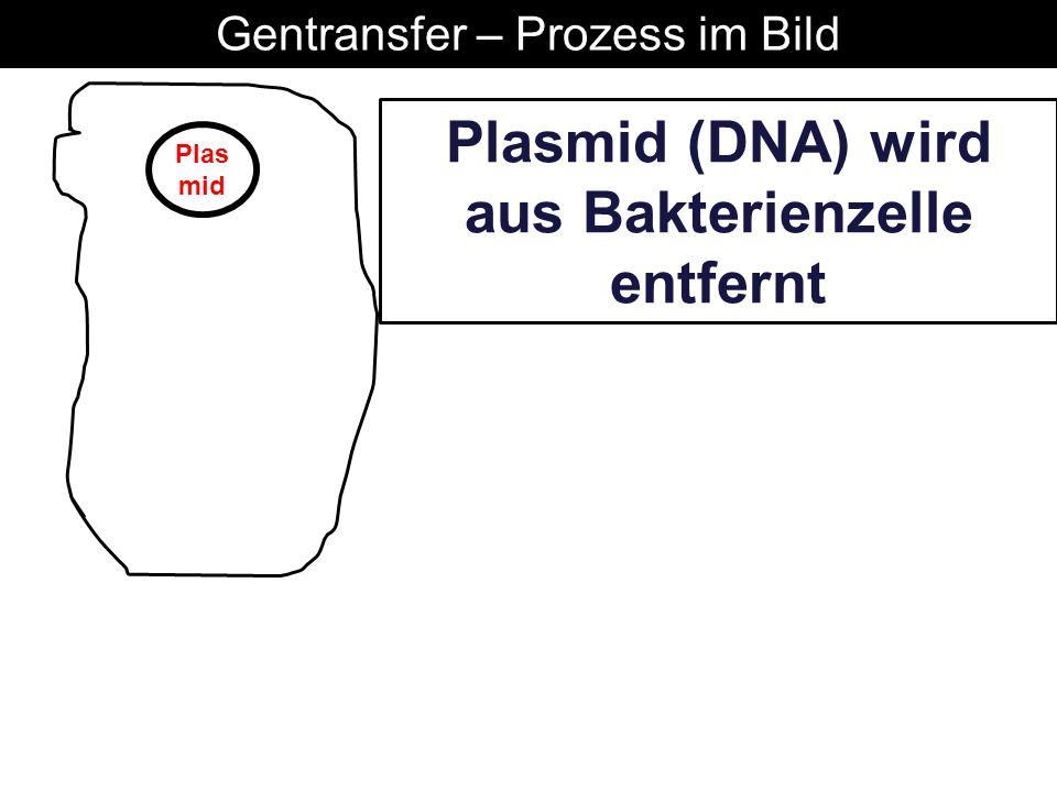 Plasmid (DNA) wird aus Bakterienzelle entfernt