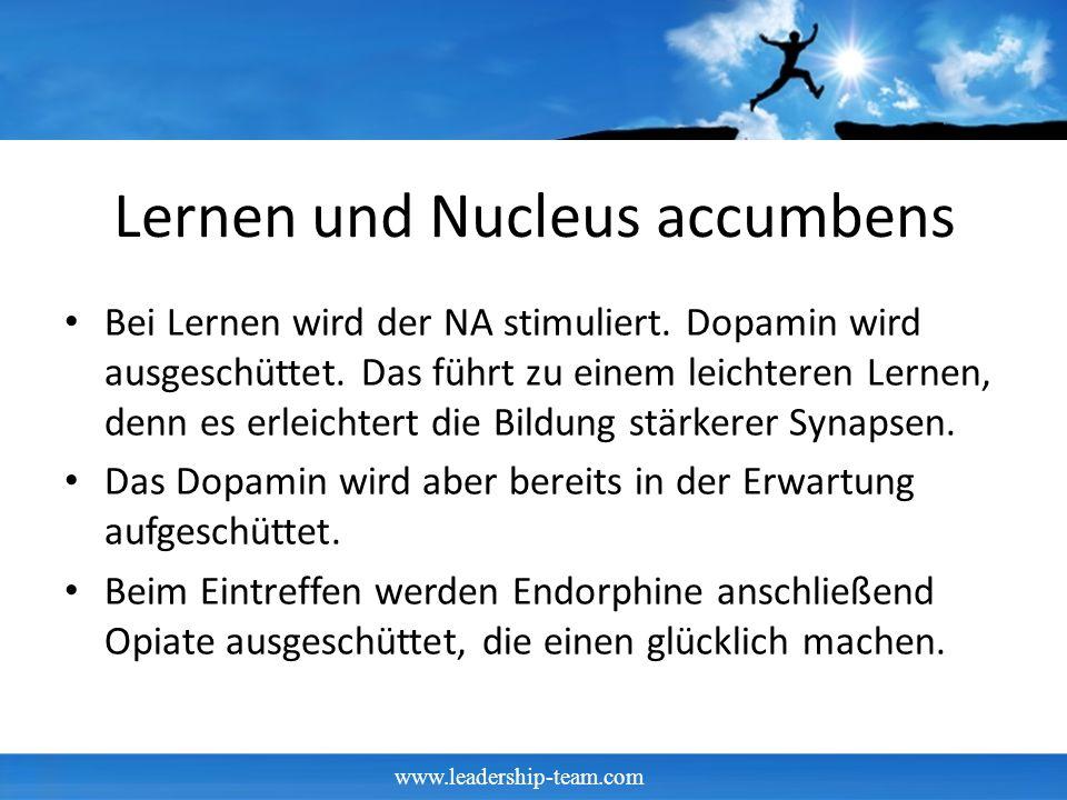 Lernen und Nucleus accumbens