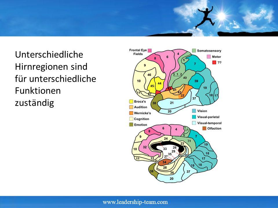 Unterschiedliche Hirnregionen sind für unterschiedliche Funktionen zuständig