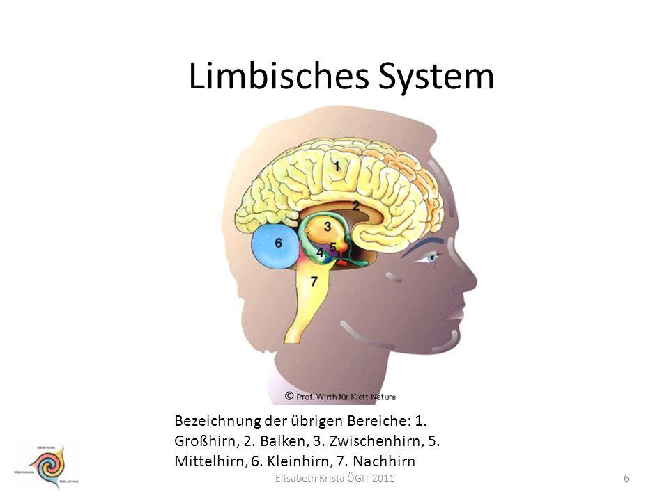 Limbisches System Bezeichnung der übrigen Bereiche: 1. Großhirn, 2. Balken, 3. Zwischenhirn, 5. Mittelhirn, 6. Kleinhirn, 7. Nachhirn.