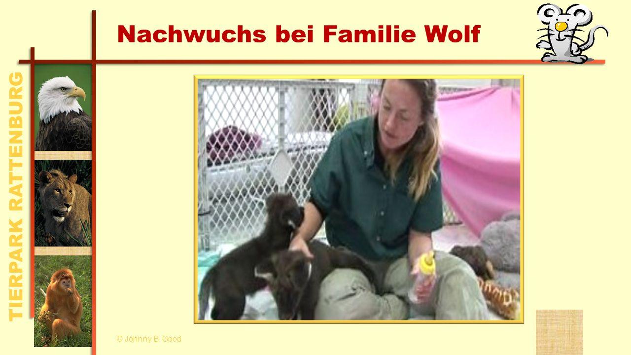 Nachwuchs bei Familie Wolf