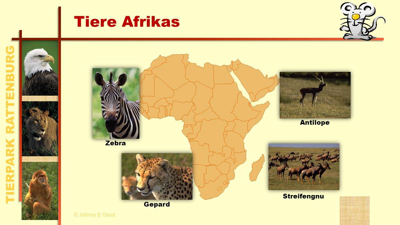Tiere Afrikas Zebra Antilope Streifengnu Gepard © Johnny B. Good