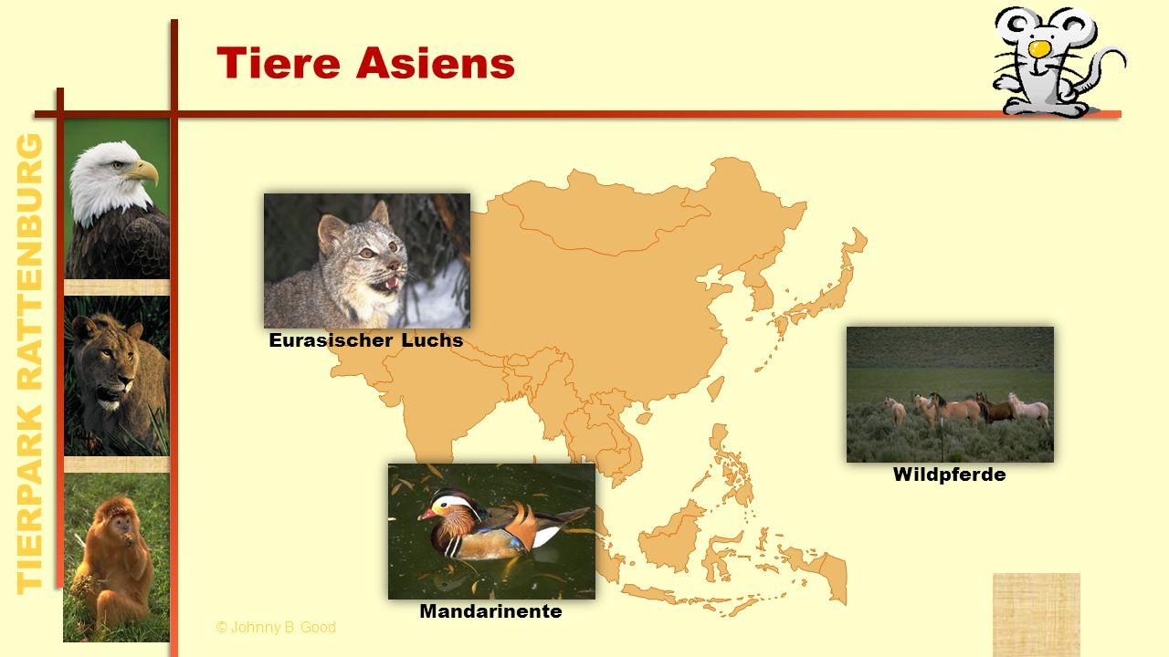 Tiere Asiens Eurasischer Luchs Wildpferde Mandarinente