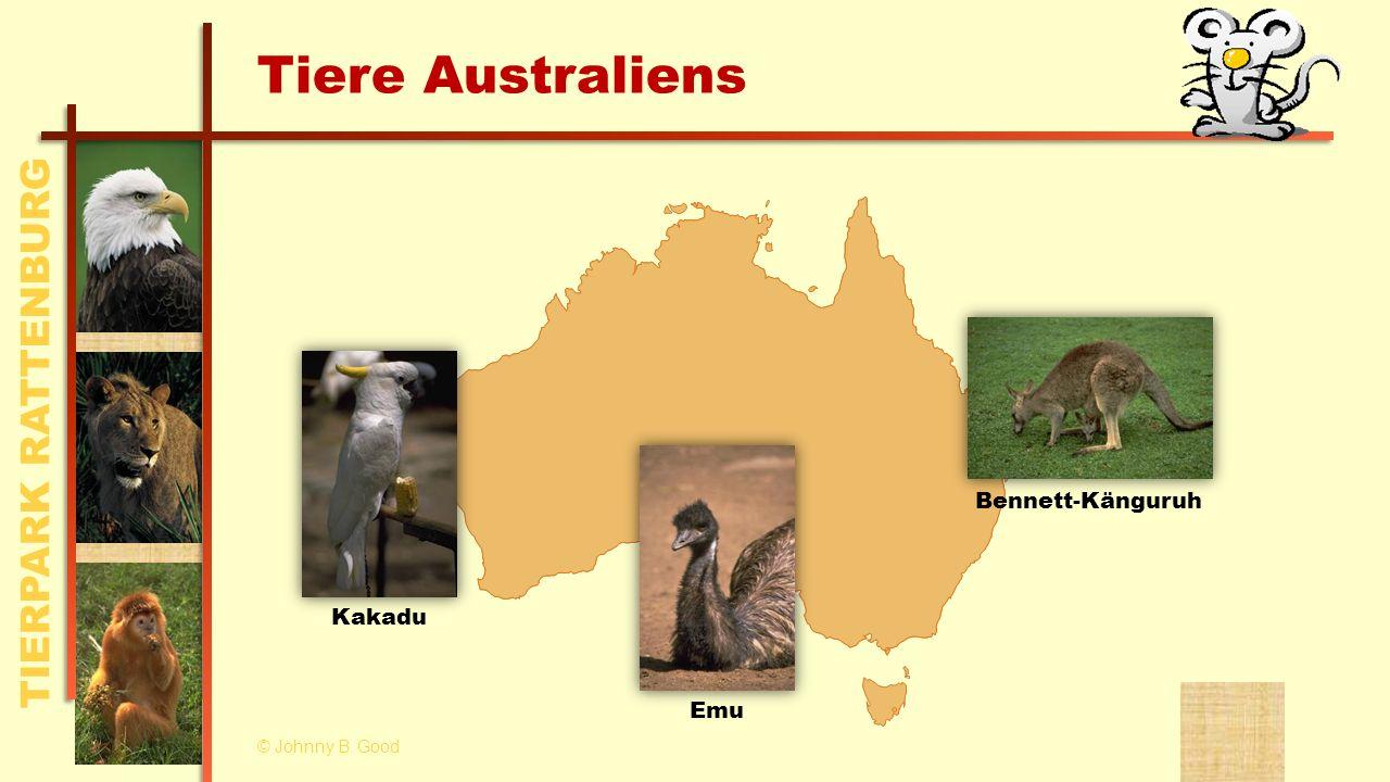 Tiere Australiens Bennett-Känguruh Kakadu Emu © Johnny B. Good