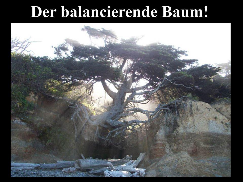 Der balancierende Baum!
