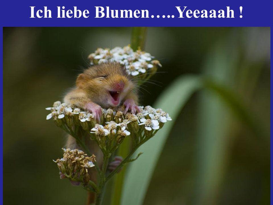 Ich liebe Blumen…..Yeeaaah !
