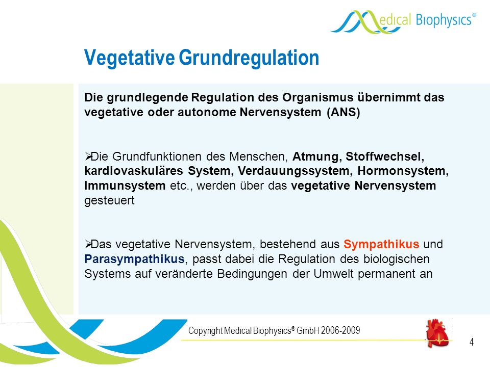Vegetative Grundregulation
