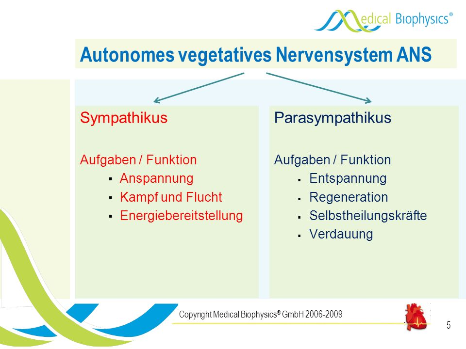 Autonomes vegetatives Nervensystem ANS