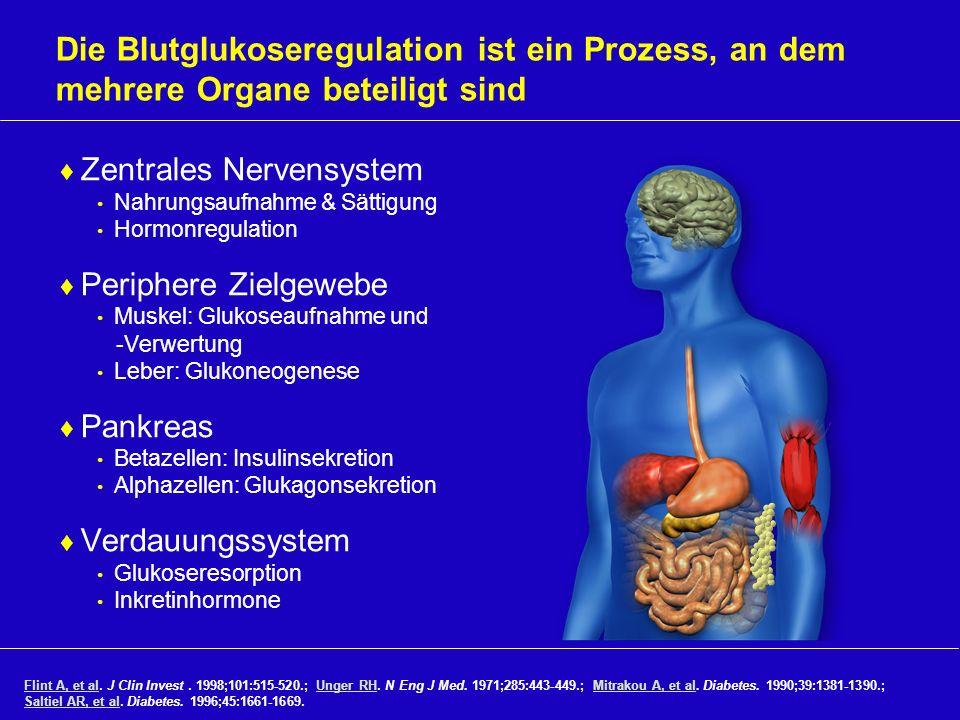 Die Blutglukoseregulation ist ein Prozess, an dem mehrere Organe beteiligt sind