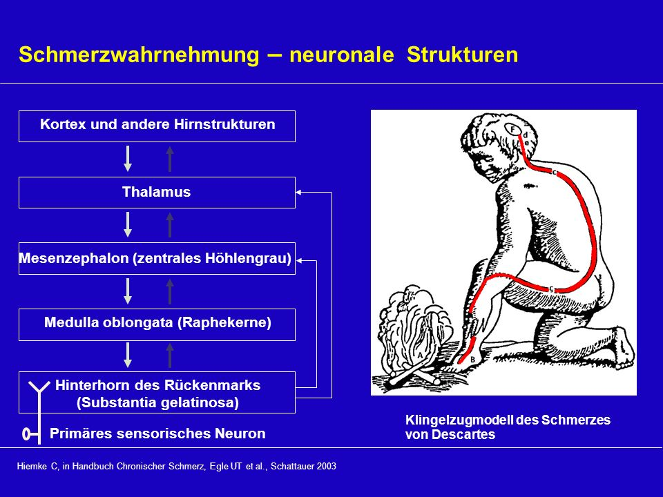 Schmerzwahrnehmung – neuronale Strukturen
