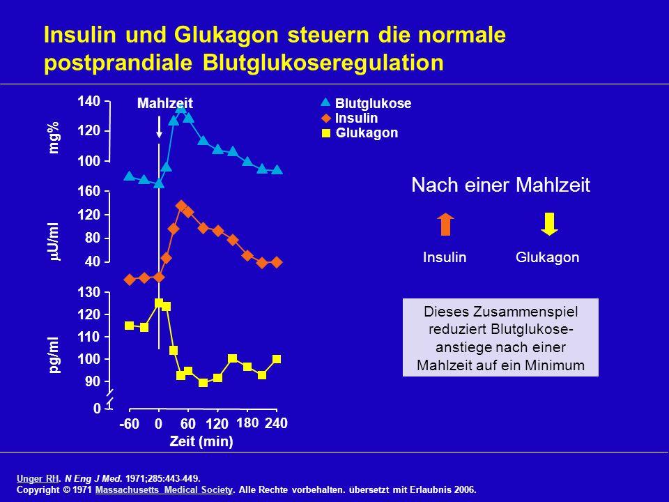 Insulin und Glukagon steuern die normale postprandiale Blutglukoseregulation