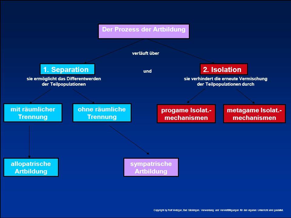 1. Separation 2. Isolation Der Prozess der Artbildung