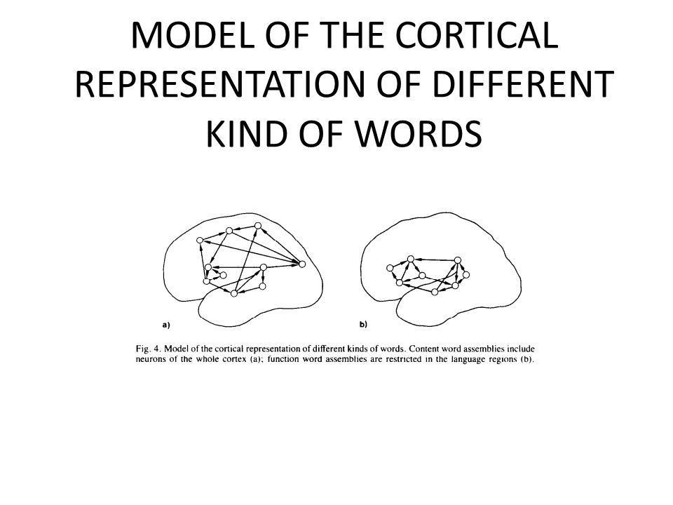 MODEL OF THE CORTICAL REPRESENTATION OF DIFFERENT KIND OF WORDS