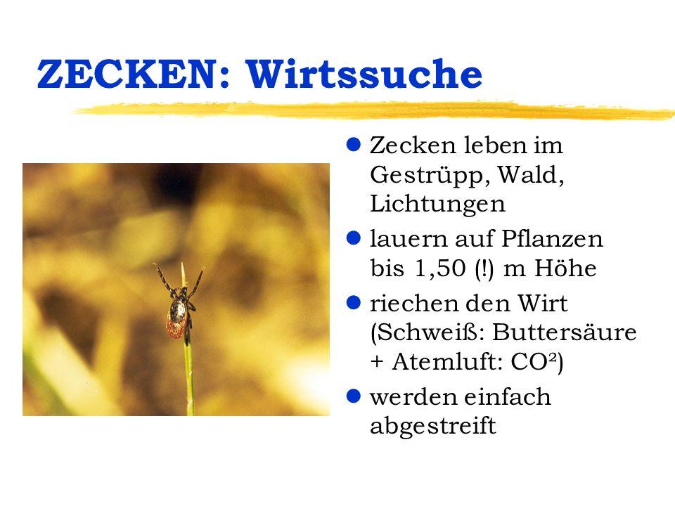 ZECKEN: Wirtssuche Zecken leben im Gestrüpp, Wald, Lichtungen