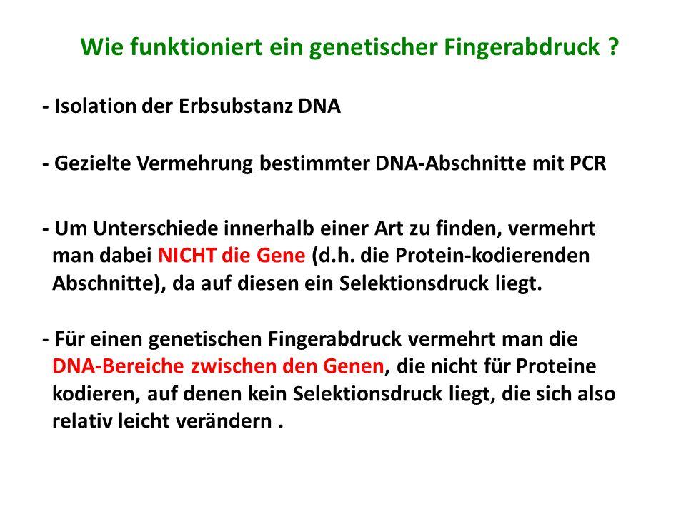 Wie funktioniert ein genetischer Fingerabdruck