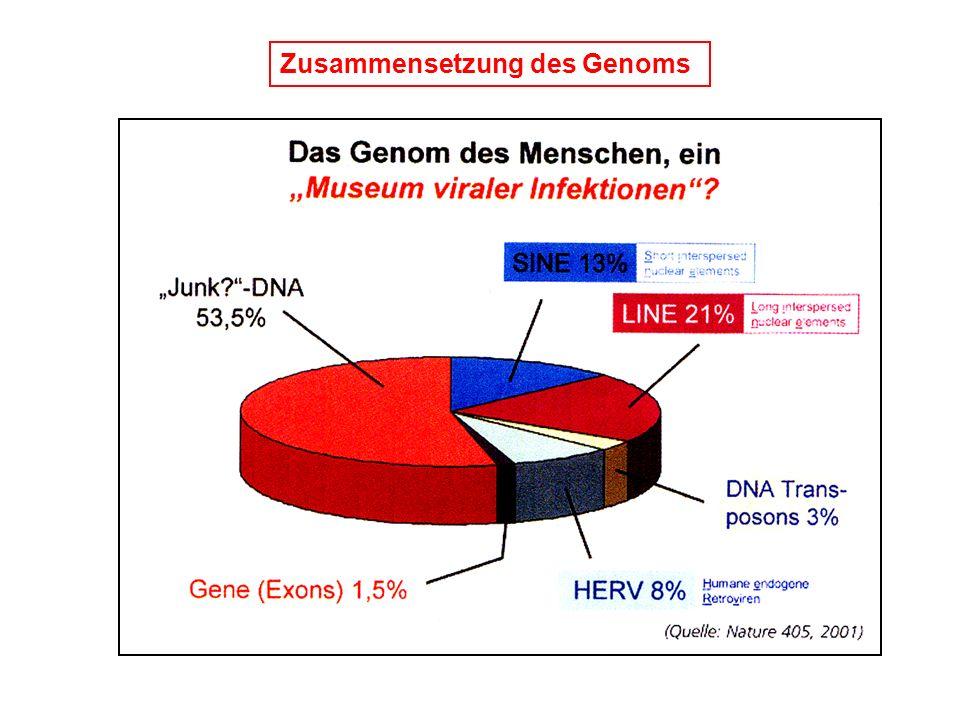 Zusammensetzung des Genoms