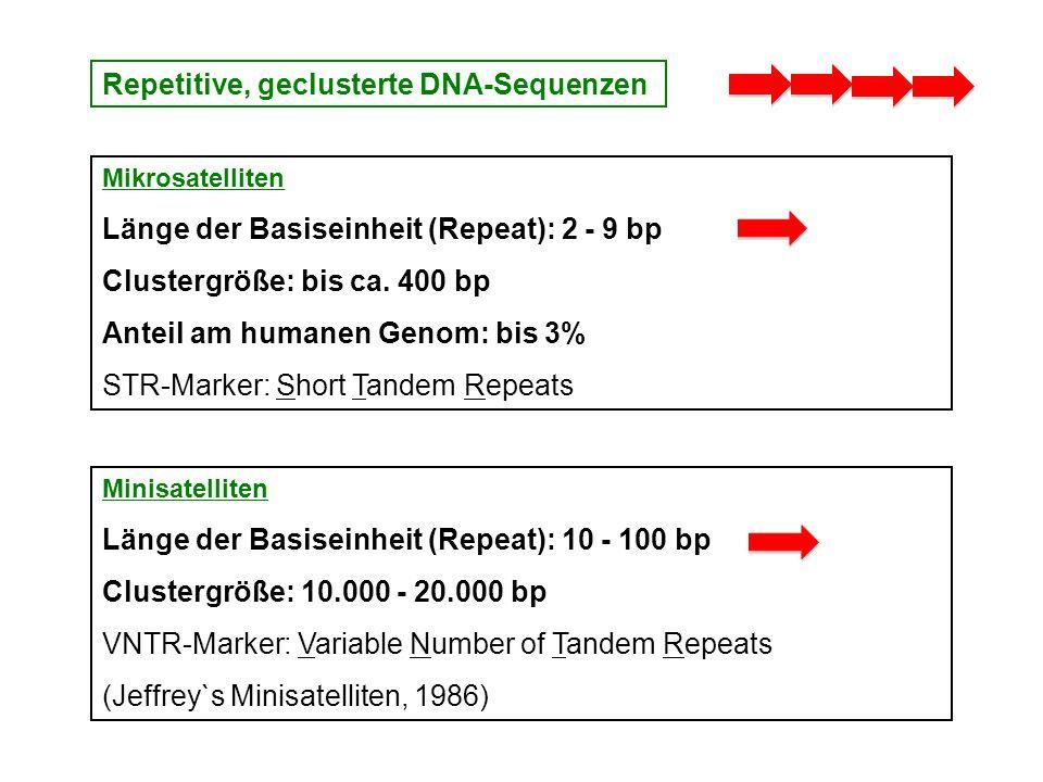 Repetitive, geclusterte DNA-Sequenzen