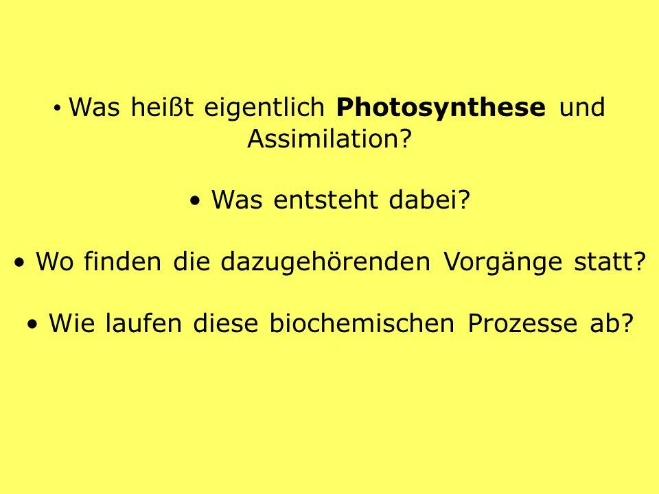 • Was heißt eigentlich Photosynthese und Assimilation