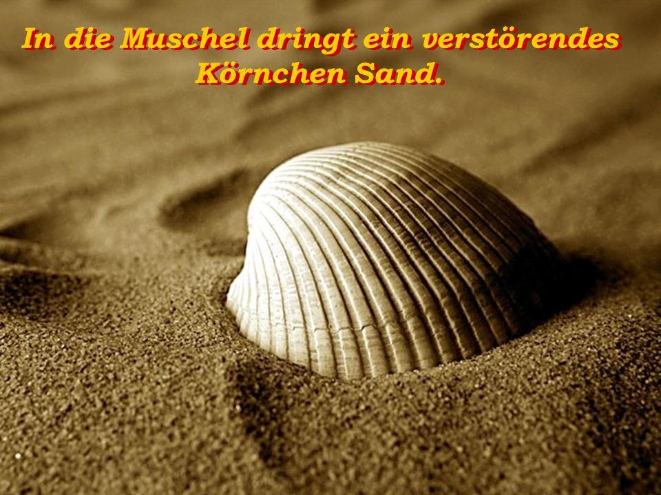 In die Muschel dringt ein verstörendes Körnchen Sand.
