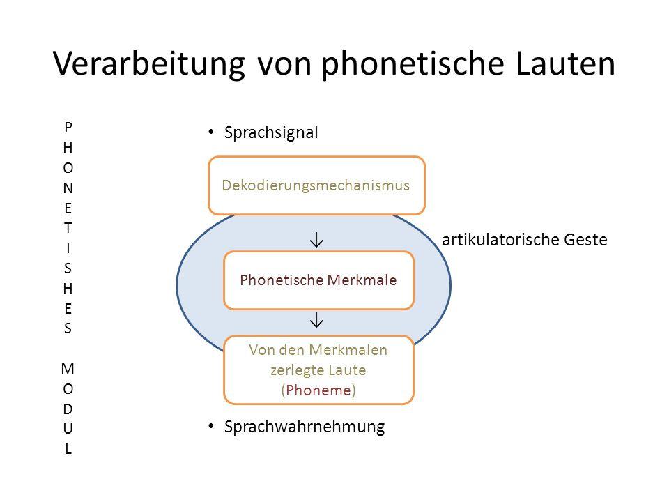 Verarbeitung von phonetische Lauten