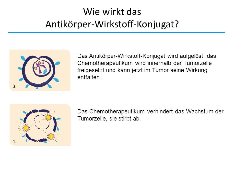 Wie wirkt das Antikörper-Wirkstoff-Konjugat