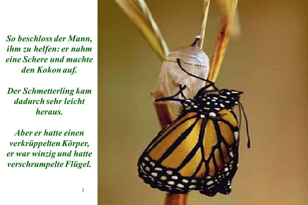 Der Schmetterling kam dadurch sehr leicht heraus.