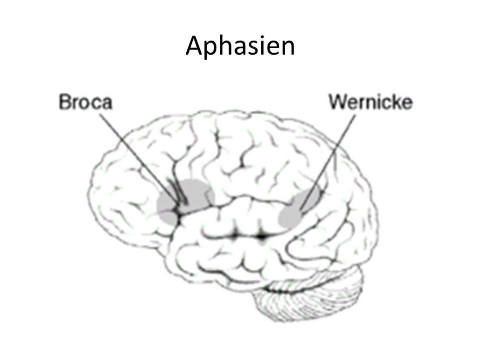 Aphasien
