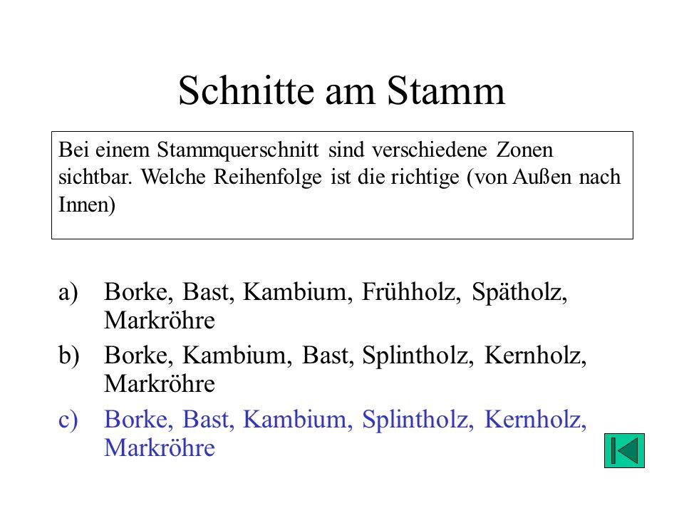 Schnitte am Stamm Borke, Bast, Kambium, Frühholz, Spätholz, Markröhre