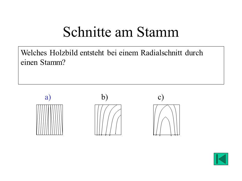 Schnitte am Stamm Welches Holzbild entsteht bei einem Radialschnitt durch einen Stamm a) b) c)