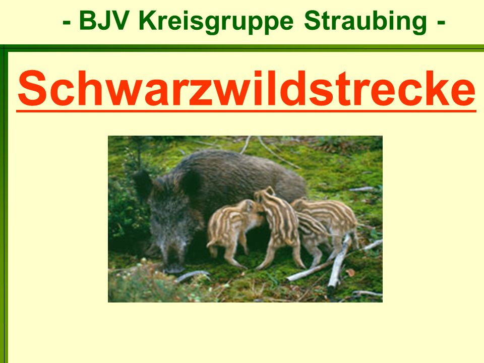 Schwarzwildstrecke
