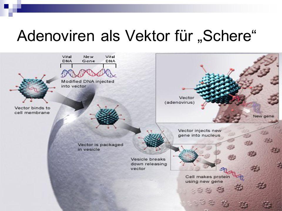 """Adenoviren als Vektor für """"Schere"""