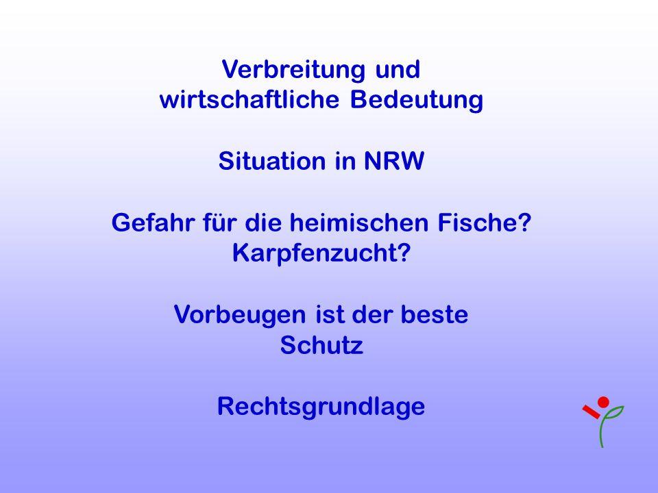 wirtschaftliche Bedeutung Situation in NRW