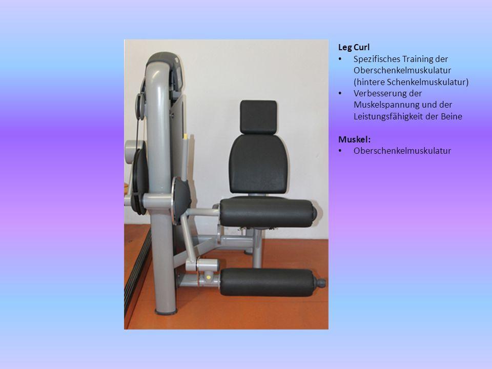Leg Curl Spezifisches Training der Oberschenkelmuskulatur (hintere Schenkelmuskulatur)