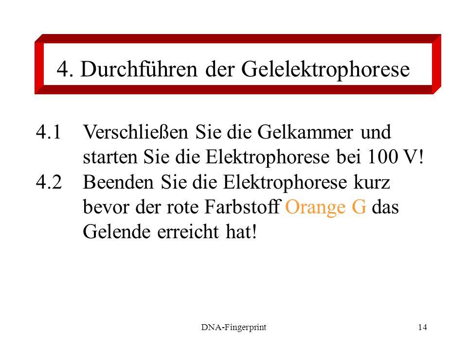 4. Durchführen der Gelelektrophorese